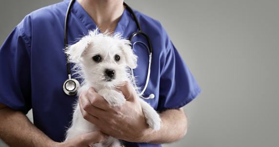 puppy and veterinarian